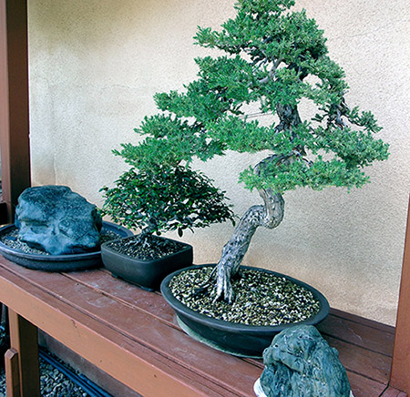 Two bonsai trees sitting between two large, dark rocks on a table.