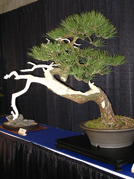 A bonsai tree sitting on a table inside.