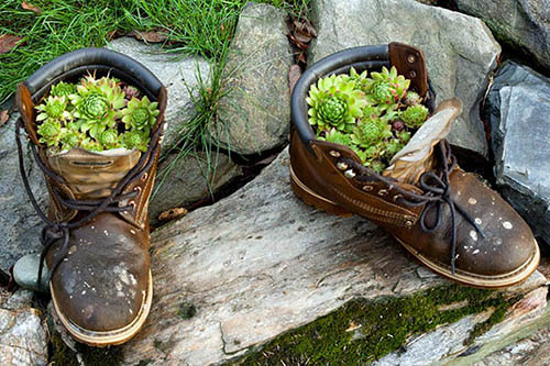 Plants growing inside a pair of old shoes.