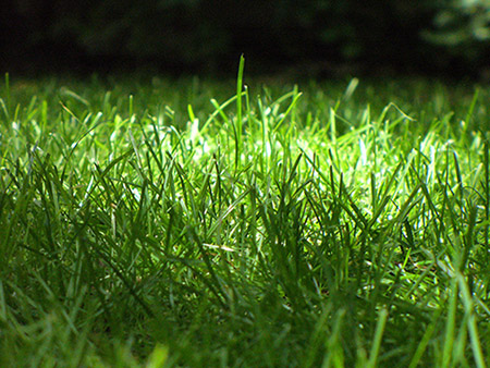 Close up photograph of grass