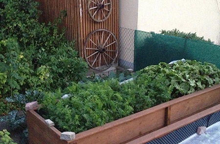 Picture of a vegetable garden growing in a raised bed plot and other plants growing in containers in the background.