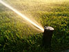 A lawn pop up sprinkler head turned on and watering the lawn.